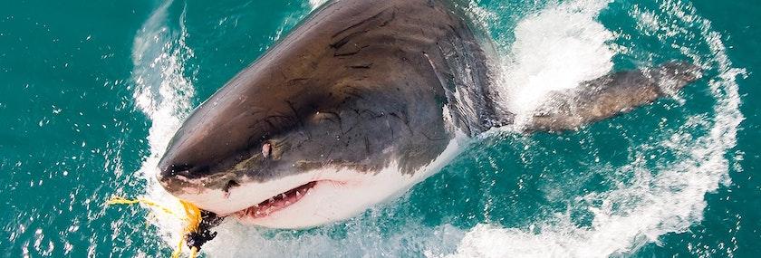 Shark Fishing Stag Do